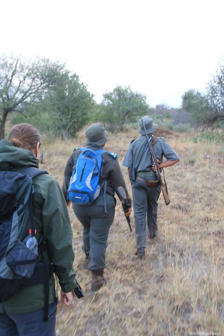 Südafrika 760- Kruger-Nationalpark Morning Walk