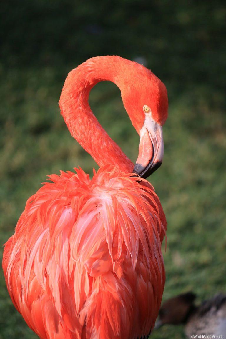 Südafrika 1495- Birds Of Eden Flamingo