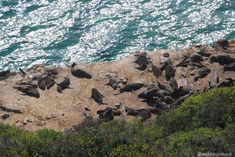 Südafrika 1562- Robberg Nature Reserve