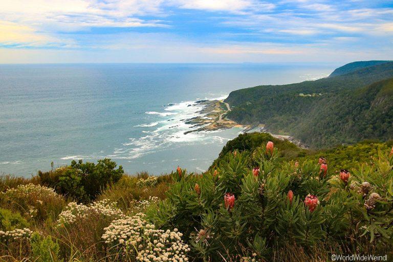Südafrika 1365- Tsitsikamma National Park