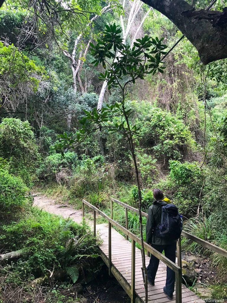 Südafrika 1378- Tsitsikamma National Park, Waterfall Trail