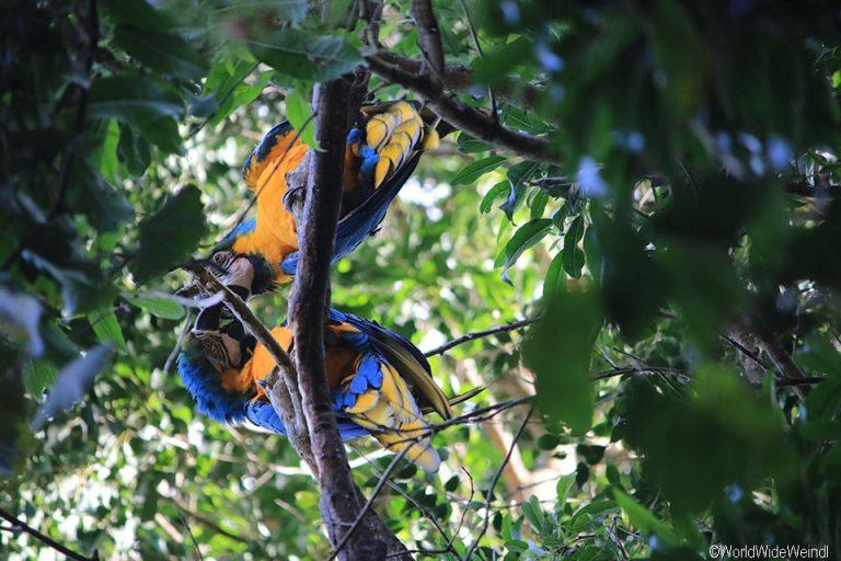 Südafrika 1430- Birds Of Eden