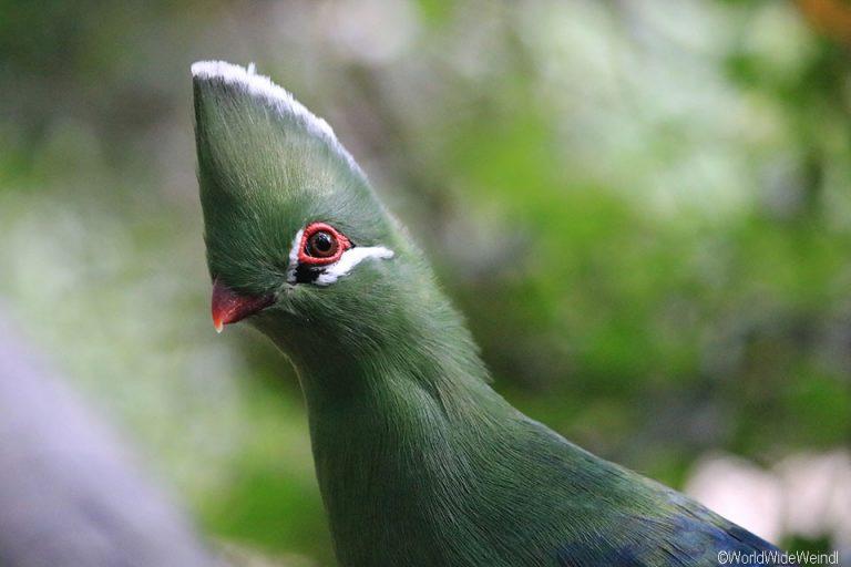 Südafrika 1455- Birds Of Eden