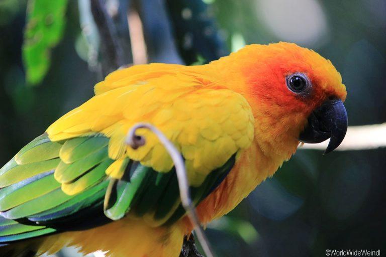 Südafrika 1470- Birds Of Eden