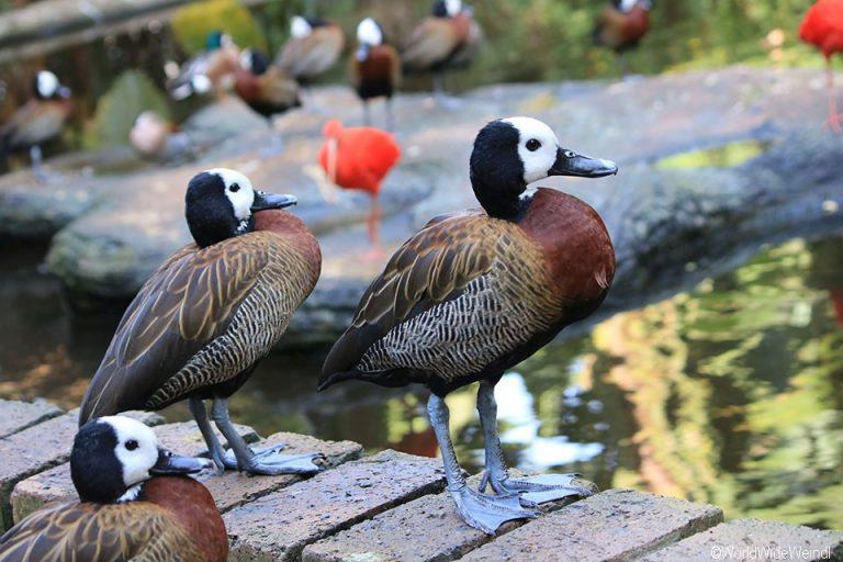 Südafrika 1480- Birds Of Eden