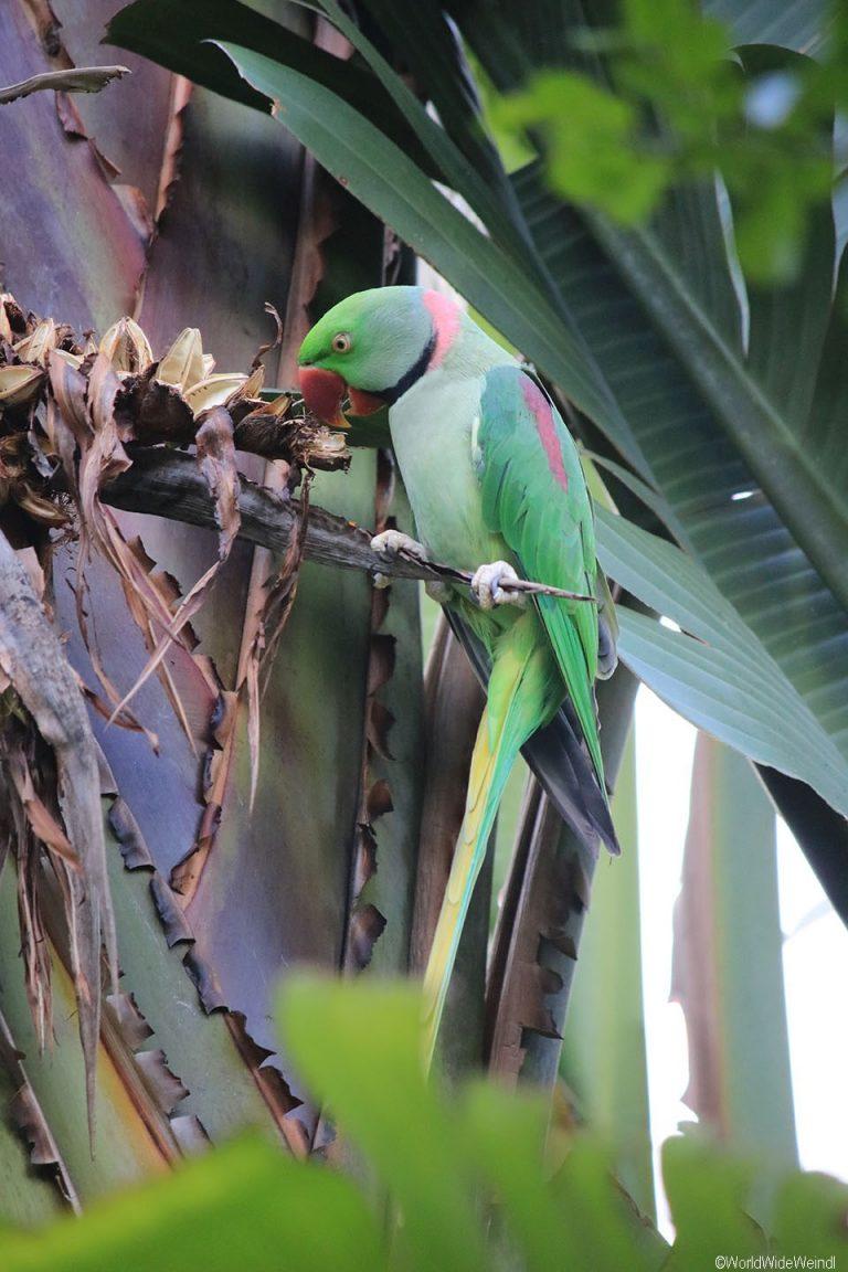 Südafrika 1490- Birds Of Eden