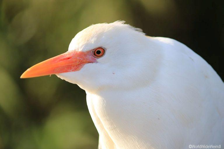 Südafrika 1535- Birds Of Eden