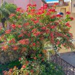 Spanien, Teneriffa_251_La Orotava